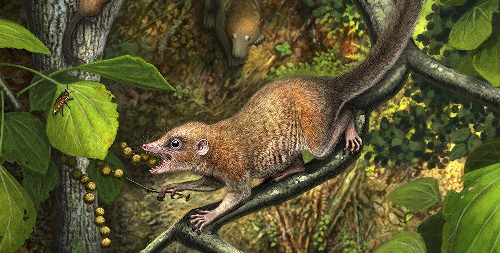 Älteste Fossilien früher Primaten entdeckt - 66 Millionen Jahre alte Zähne sprechen für den Ursprung der Primaten vor Ende der Kreidezeit - scinexx.de - scinexx | Das Wissensmagazin