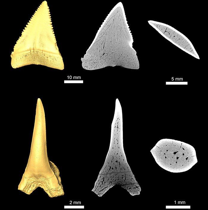 Urzeithai