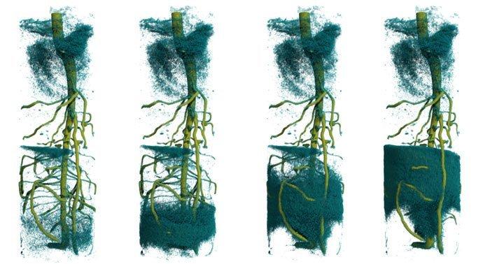 Wasseraufnahme in der Pflanzenwurzel