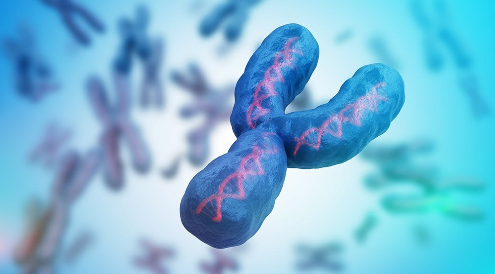 Y-Chromosom