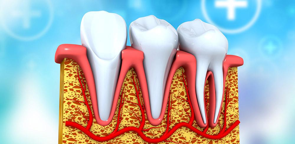 Erster Atlas menschlicher Zahnzellen